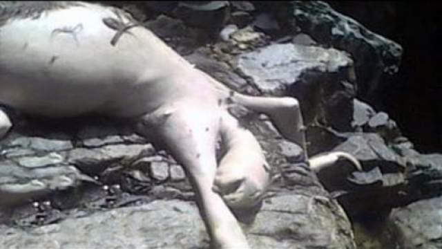 """Панамский монстр """"Существо из Панамы"""" (которого называют также Панамским монстром, Монстром Синего потока или Ужасом Синих холмов) было найдено и убито подростками в Панаме в сентябре 2009 года. НАйдено оно было на берегу реки недалеко от города Серро-Асуль."""