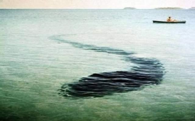 Морской монстр возле острова Хук - 12 декабря 1964 года Эта фотография сделана в 1964 году, и до сих пор странное существо является настоящей загадкой для криптозоологов.