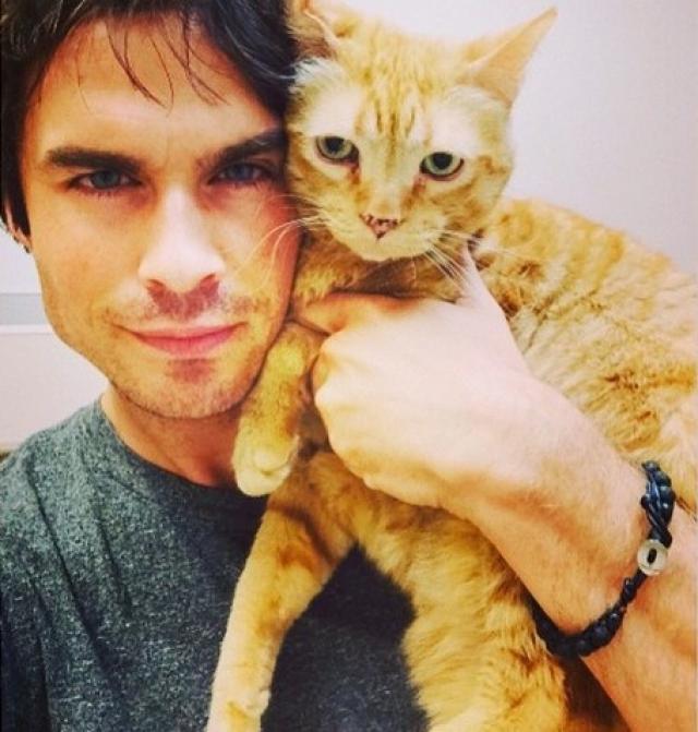 Йен Сомерхолдер. Актер большой любитель домашних животных, у него дома живет 6 собак и любимый кот по кличке Моук.