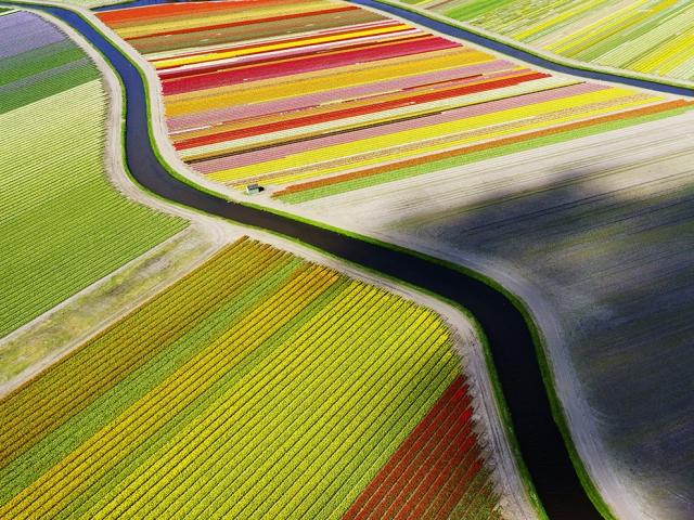 Поля тюльпанов в Нидерландах. Anders Andersson