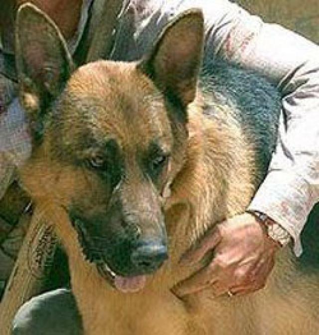 """К огромному сожалению всех поклонников Котона и фильма """"К-9"""", 18 ноября 1991 года при аресте преступника, подозреваемого в убийстве полицейского, отважный пес был застрелен."""