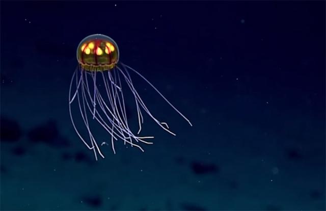 Фантастическую медузу ученые сняли на видео во время погружения на 3 700 метров.