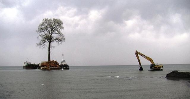 Бидзина Иванишвили заказал доставку векового дерева в дендрологический парк, который расположен вокруг его поместья в поселке Уреки на побережье моря.