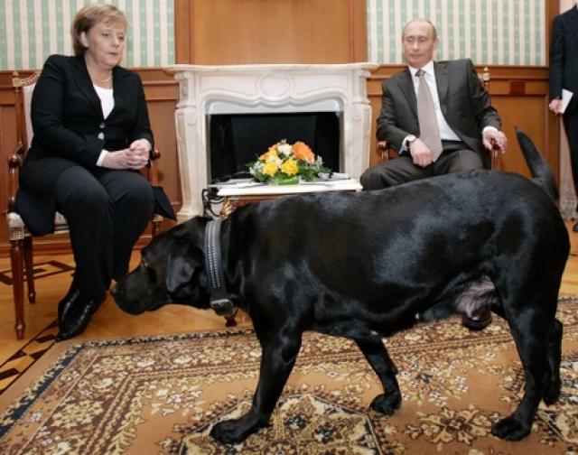 """...Меркель с трудом взяла себя в руки, а Путин поинтересовался """"Собака вас не пугает?""""."""