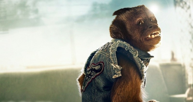 Обезьянка Кристалл. Эта мартышка-капуцин является самой высокооплачиваемой в мировом кинематографе.