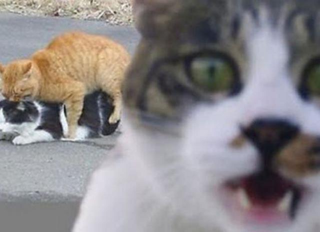 Эй, тут не на что смотреть!