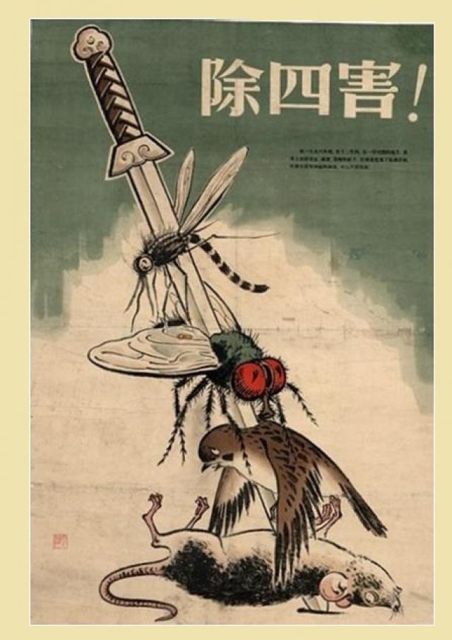 """Одним из первых и самых амбициозных проектов стала """"Война против четырех вредителей"""": крыс, мух, комаров и воробьев."""