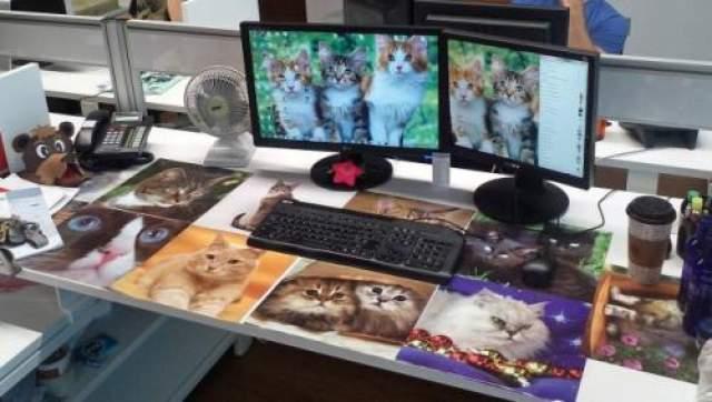 Любителям кошек Настоящие фанаты кошек точно оценят эту шутку.
