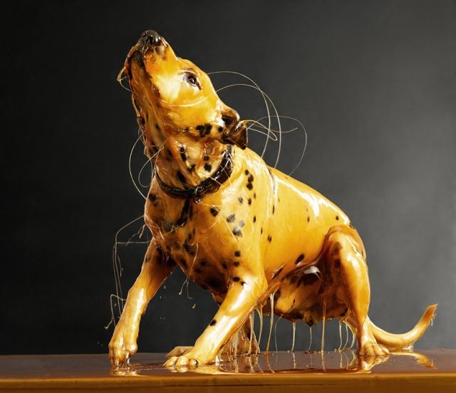 Фотограф экспериментирует не только с людьми - среди застывших в меде образов есть и собака.