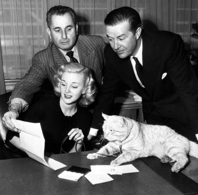 """В конце 40-х годов прошлого века Оранджи, голодный и побитый, объявился в саду дома миссис Агнес Мюррей, своей будущей хозяйки. Когда Парамаунт объявил о начале подбора кота """"с мерзким характером и со шрамами на морде""""на роль Рубарба в фильме """"Рубарб"""", миссис Мюррей отправила фотографии Оранджи на студию."""