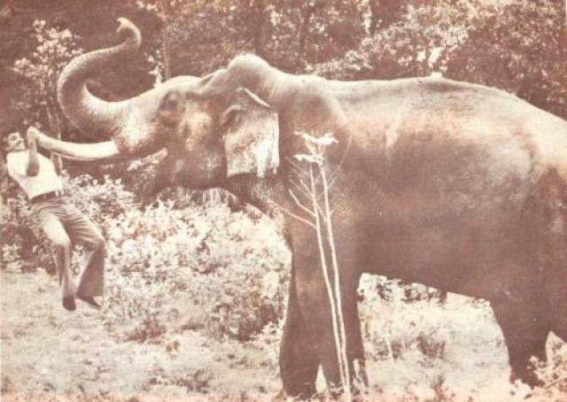 «Ударная волна» (1981) – смерть актера и каскадера Джаяна Популярнейший индийский артист кино Кришнан Наир, известный как Джаян, был не только актером, но и отважным каскадером, всегда самостоятельно выполнявшим даже самые опасные трюки в своих фильмах.