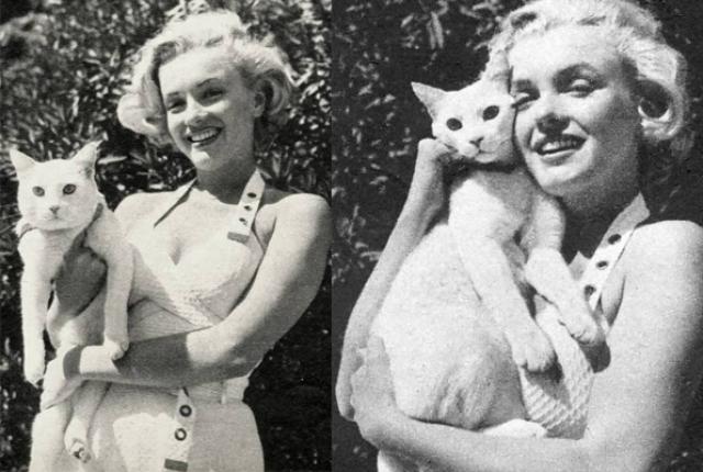 Мэрилин Монро и ее кошка Митцу.