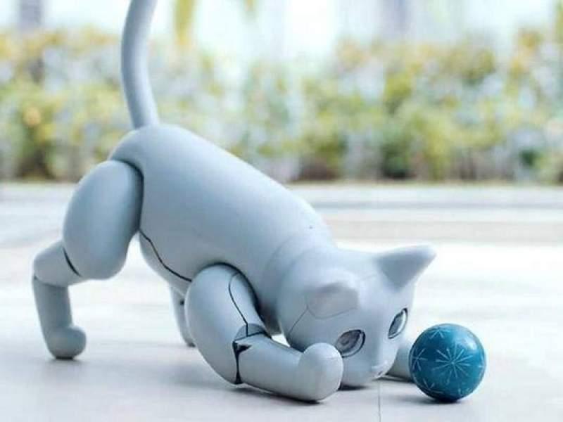 Забавный робот-кошка покорил Сеть