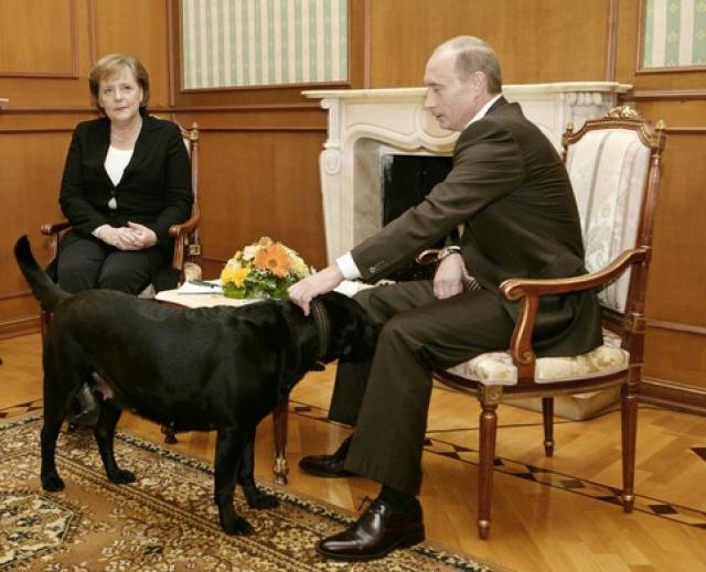 Порой, братьев наших меньших российский президент использует и в качестве орудия манипуляции. Ангела Меркель, например, очень боится собак, и хотя ее сотрудники предупреждают заранее, что во время визитов канцлера собак нигде быть не должно, во время встречи Путина и Меркель лабрадор Кони свободно зашла в комнату...