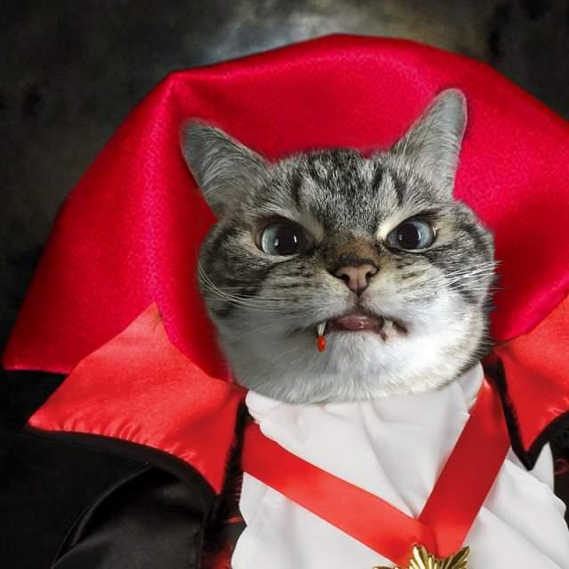 Благодаря необычному прикусу, котик напоминает вампира, что очень нравится его подписчикам, число которых перевалило за 300 тысяч.