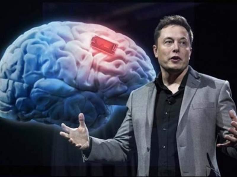 Илон Маск показал свинью с имплантированным в мозг чипом
