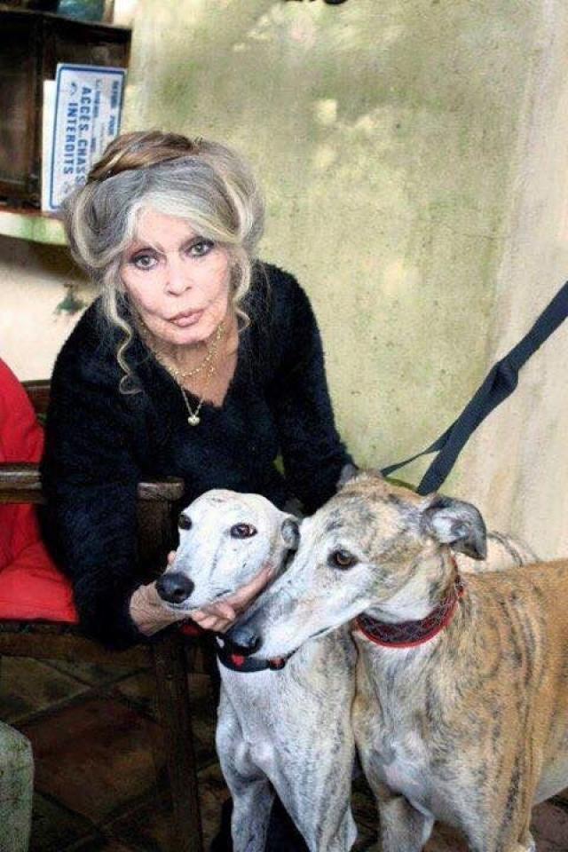 """С конца пятидесятых годов Бриджит проживает на вилле """"Мадраг"""" в Сен-Тропе на юге Франции, где сейчас компанию ей составляют пара сотен животных."""