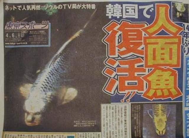 Диковинные рыбы находились в бассейне частного дома в местечке Ченхью (провинция Чунгчонг) - об этом сообщило издание Chungcheong Today. И другие СМИ тотчас подхватили сенсацию о самом поразительном открытии века.