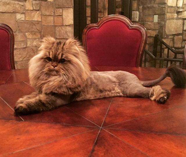 """Кот Билзериана по кличке Пушинстик имеет собственный Инстаграм с 900 000 подписчиков. Судя по постам там, Пушистик - """"кошачья"""" версия своего хозяина: там есть фотографии кота с оружием, голыми женщинами и фишками для покера."""