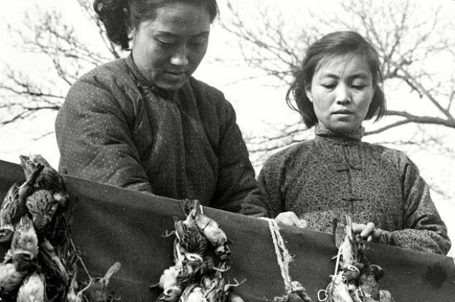 Протестовал только крупнейший китайский орнитолог профессор Ченг Цо-син, настаивая на научном подходе к проблеме. Он провел кропотливые исследования и опубликовал объективные статьи о пользе и вреде воробьев в центральных газетах.