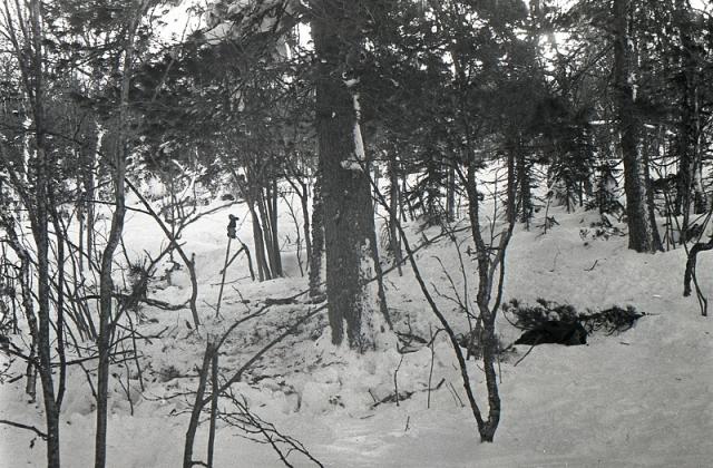 На самом кедре, вплоть до пяти метров в высоту были обломаны ветки. Довольно толстые ветки на высоте были сначала подпилены ножом, а потом с силой отломаны. На коре были обнаружены следы крови.