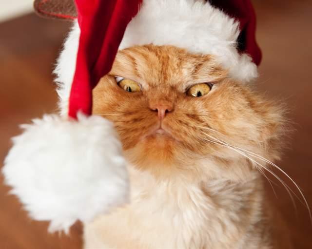Его хозяин радует многотысячную аудиторию Инстаграма котика фото любимца во всех возможных нарядах и ситуациях.