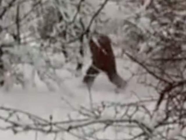 След йети в Адыгее На сей раз снежного человека сумели заснять на камеру мобильного телефона в Адыгее. Хотя специалисты считают, что съемка могла быть и постановочной.