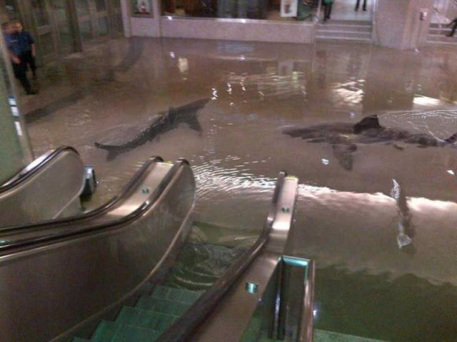 Акулы в супермаркете в Кувейте. Нет, выбравшихся на свободу после прорыва бассейна и плавающих вокруг эскалатора хищников не было.