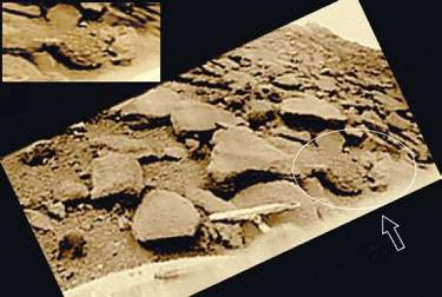"""Сложная симметричная форма и другие особенности объекта(стрелка ) выделяют его на фоне каменистой поверхности планеты в точке посадки """"Венеры-9"""". Размеры объекта около полуметра. На врезке объект показан при исправленной геометрии."""