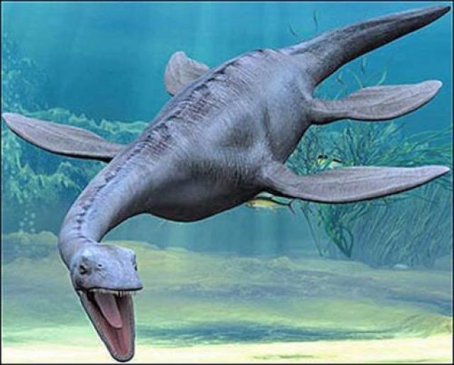 По словам ученых, это первая находка останков плезиозавра – гигантского водяного ящера, жившего примерно 150 миллионов лет назад.