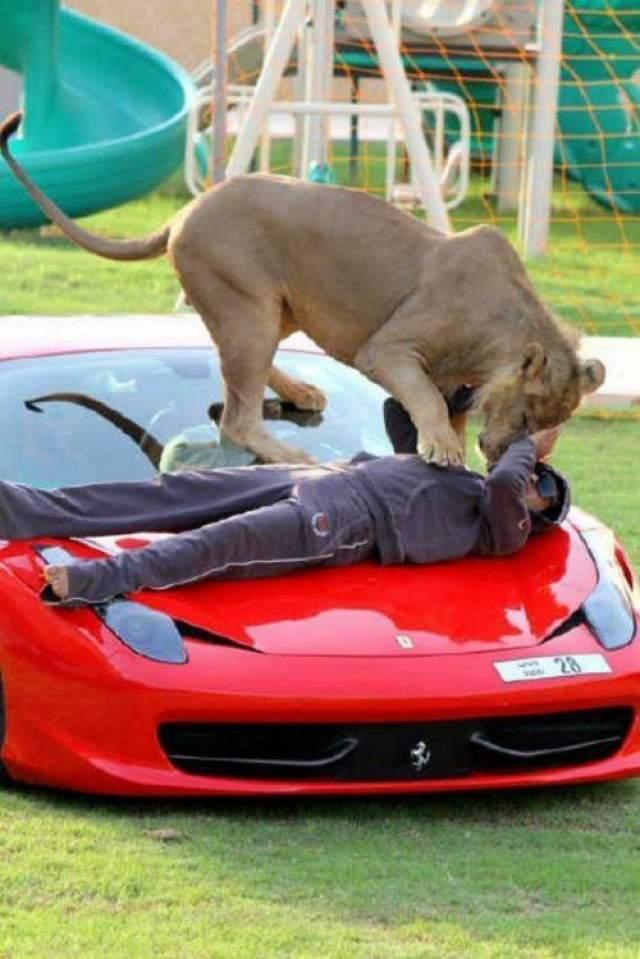 """Хумейд Аибукеш из Эмиратов прославился на Инстаграмма двумя своими """"хобби"""" - дорогими автомобилями и большими кошками."""