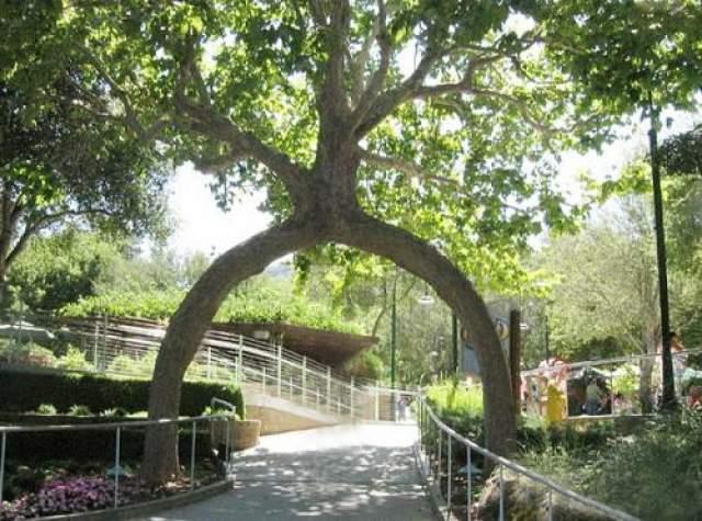 """Интересный факт: в 1985 году после того, как """"Tree Circus"""" перестал существовать, деревья были выкуплены миллионером Майклом Бонфанте"""