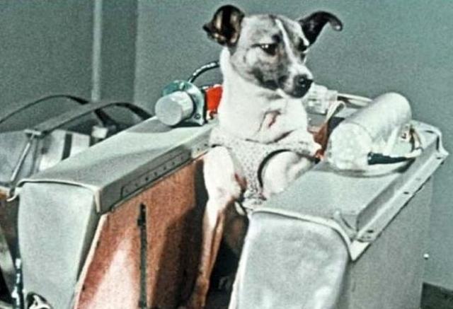 Позднее исследования показали, что Лайка, вероятно, погибла от перегрева через 5-7 часов полета.