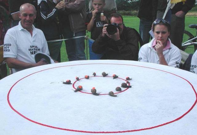 """Мировой улиточный """"забег"""". Чемпионат проводится уже в течении 25 лет в Великобритании. Улиток складируют в центр круга и очень долго ждут пока одна из улиток не выберется за его пределы."""
