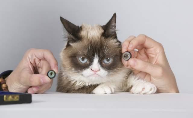Недовольная дама рекламировала корм, кофе, линии одежды… Именно она стала первой кошкой, чья восковая копия представлена в музее Мадам Тюссо.