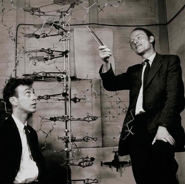 Фрэнсис Крик и Джеймс Уотсон. Биологи сумели первыми раскрыть секрет структуры молекулы ДНК и механизм ее репликации. До этого специалисты никак не могли понять, как белки–нуклеотиды такую огромную молекулу, да при этом еще и устойчивую.