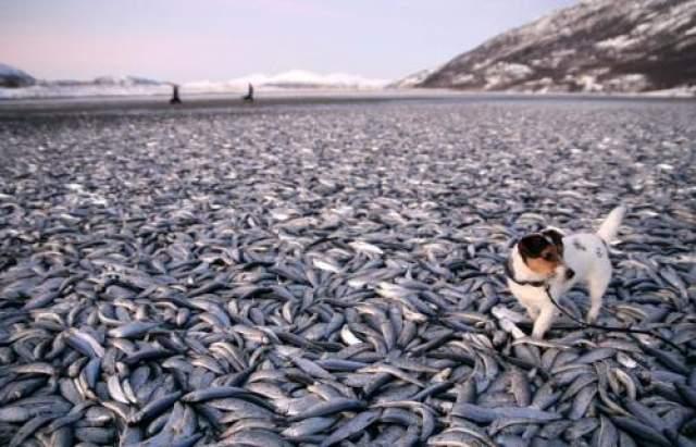 реальные подсчеты количества рыбы не состоялись, потому что не успели люди даже начать подсчеты, как вся рыба исчезла. Никакого объяснения, опять же, не нашлось.