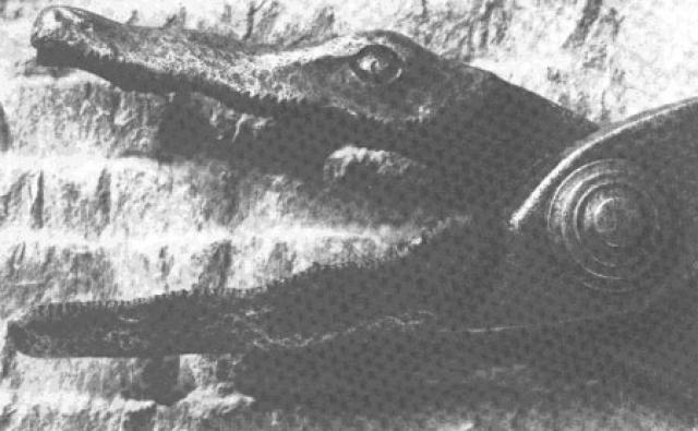 """""""Крокодил"""". Трубчатые металлические клещи также раскалялись и использовались для того, чтобы рвать половой член истязаемого. Причем вначале добивались стойкой твердой эрекции, после чего начиналась пытка"""