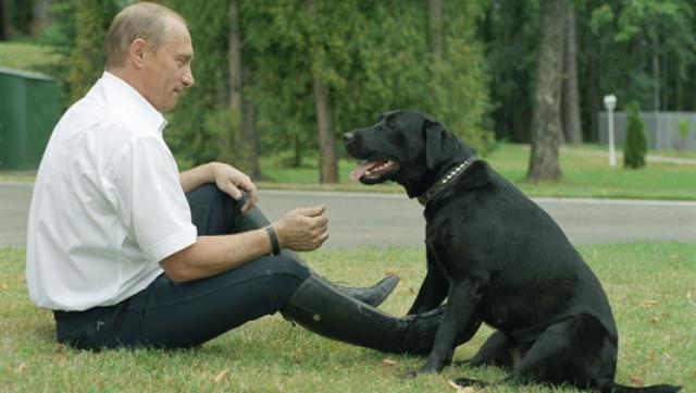 И дома у Владимира Владимировича тоже много живности: четыре собаки - черный лабрадор Кони, два пуделя и каракачан Баффи…