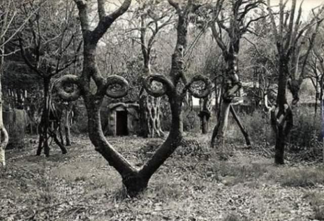 """Аксель Эдландсон (1884-1964) Аксель начинал как обычный фермер, у которого было хобби самому формировать стволы деревьев. позднее в течение десятилетий он """"учил"""" деревья расти по формам его собственного дизайна."""