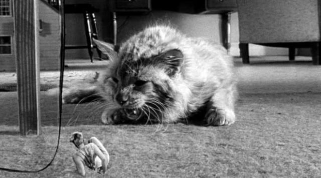 """Кот вскоре показал свой нрав - шипел, царапался и кусался, дрался с людьми и со своими котами-напарниками. Исполнительный продюсер фильма называл Оранджи """"самым дрянным котом в мире""""."""