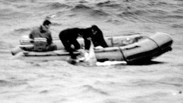 Капитан сухогруза Laurentian Forest показал, что видел на высоте 8 миль взрыв в воздухе и заявил, что самолет сделал два полных оборота вокруг своей оси, прежде чем развалиться.