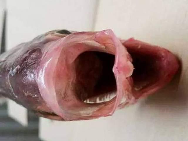 Уоррик рассказал, что обычно деформированную рыбу он использовал для удобрений. В 2010 году рыбак из Канады поймал похожую.