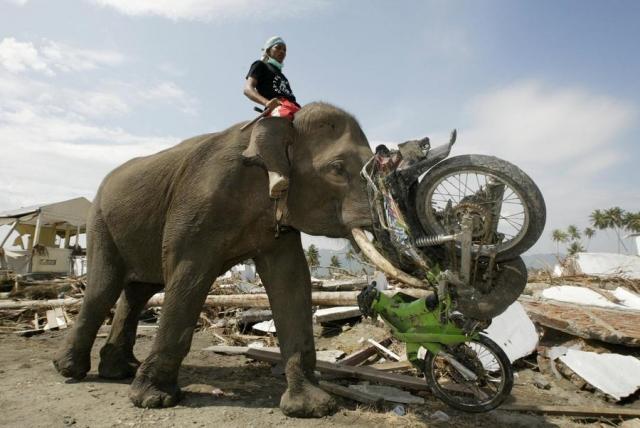 Очевидцы трагических событий 2004 года утверждают, что первыми приближение катастрофы почувствовали животные. Люди рассказывают, что за несколько минут до начала цунами, как только стала отступать вода, вся живность покинула опасную зону.