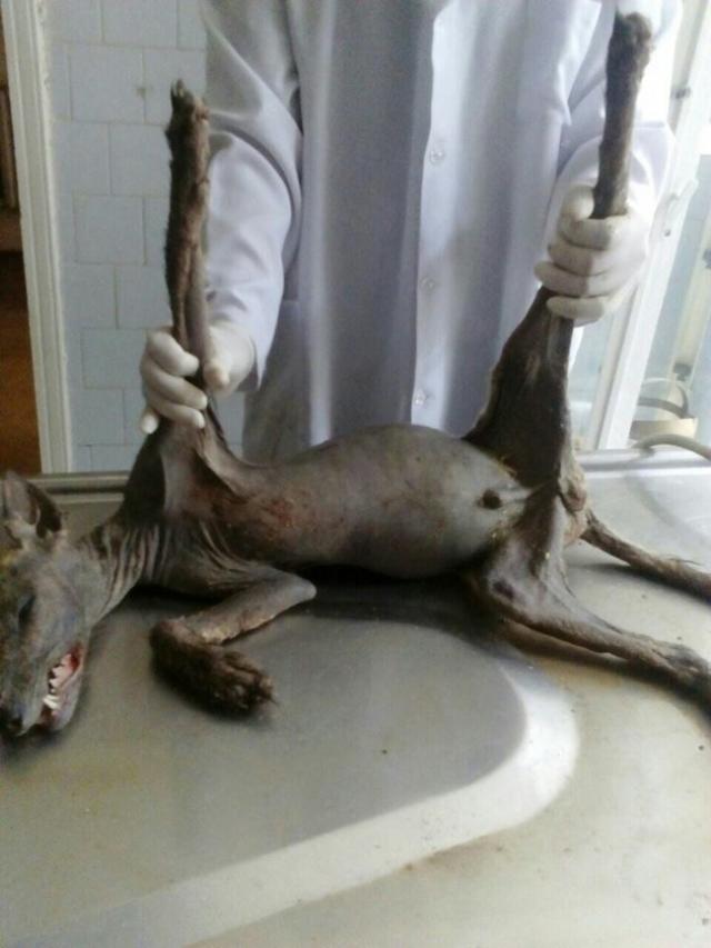 В Черновицкой области Украины житель в своем дворе забил лопатой неизвестного зверя.