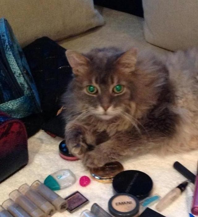 Пушистого кота зовут Mr. Big (Мистер Большой), его фотографиями певица регулярно делится в своих аккаунтах в соцсетях.