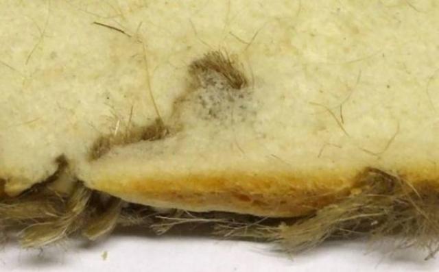 Жительница Северной Ирландии обнаружила кусок мешковины в куске хлеба. Хлеб был куплен в местном магазине, как раз перед Рождеством. Производители были оштрафованы на $ 1000.