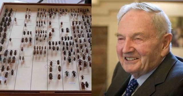 Рокфеллер был обладателем самой большой коллекцией жуков в мире. Говорили, что на прогулку он не выходил без банки, в которую всегда старался поймать новый экземпляр.