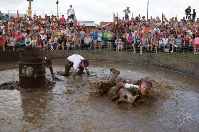 Борьба в грязи со свиньями.