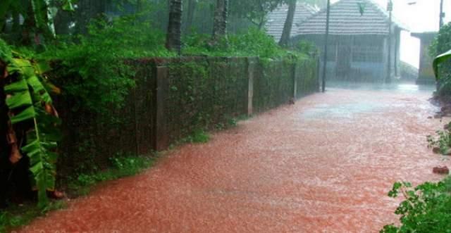 """""""Кровавый дождь"""". В индийском штате Керала на протяжении месяца в 2001 году лили кровавые дожди."""